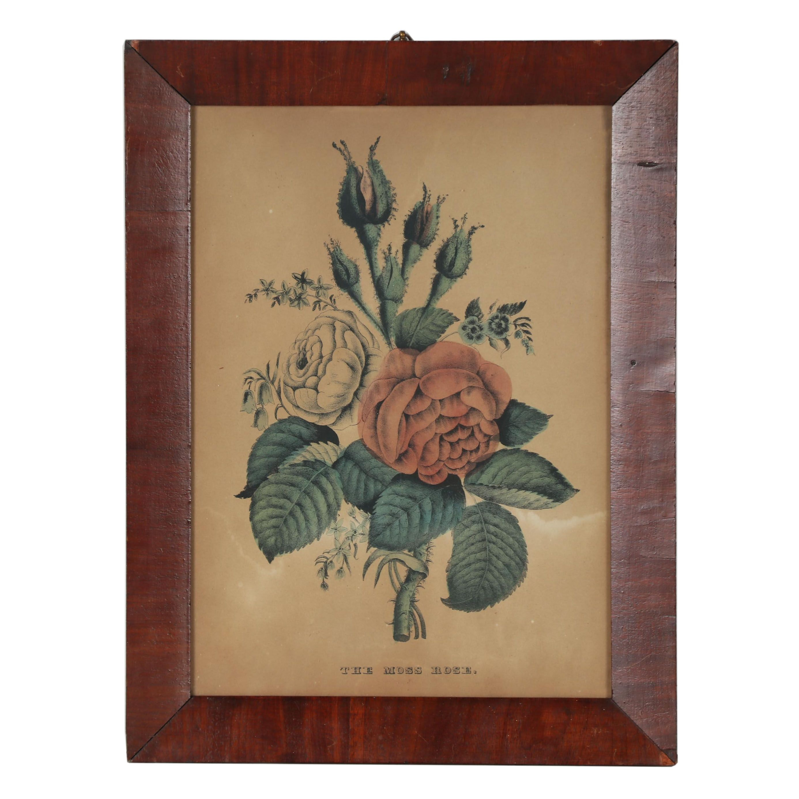 "Hand-Colored Lithograph after Nathaniel Currier ""The Moss Rose"""