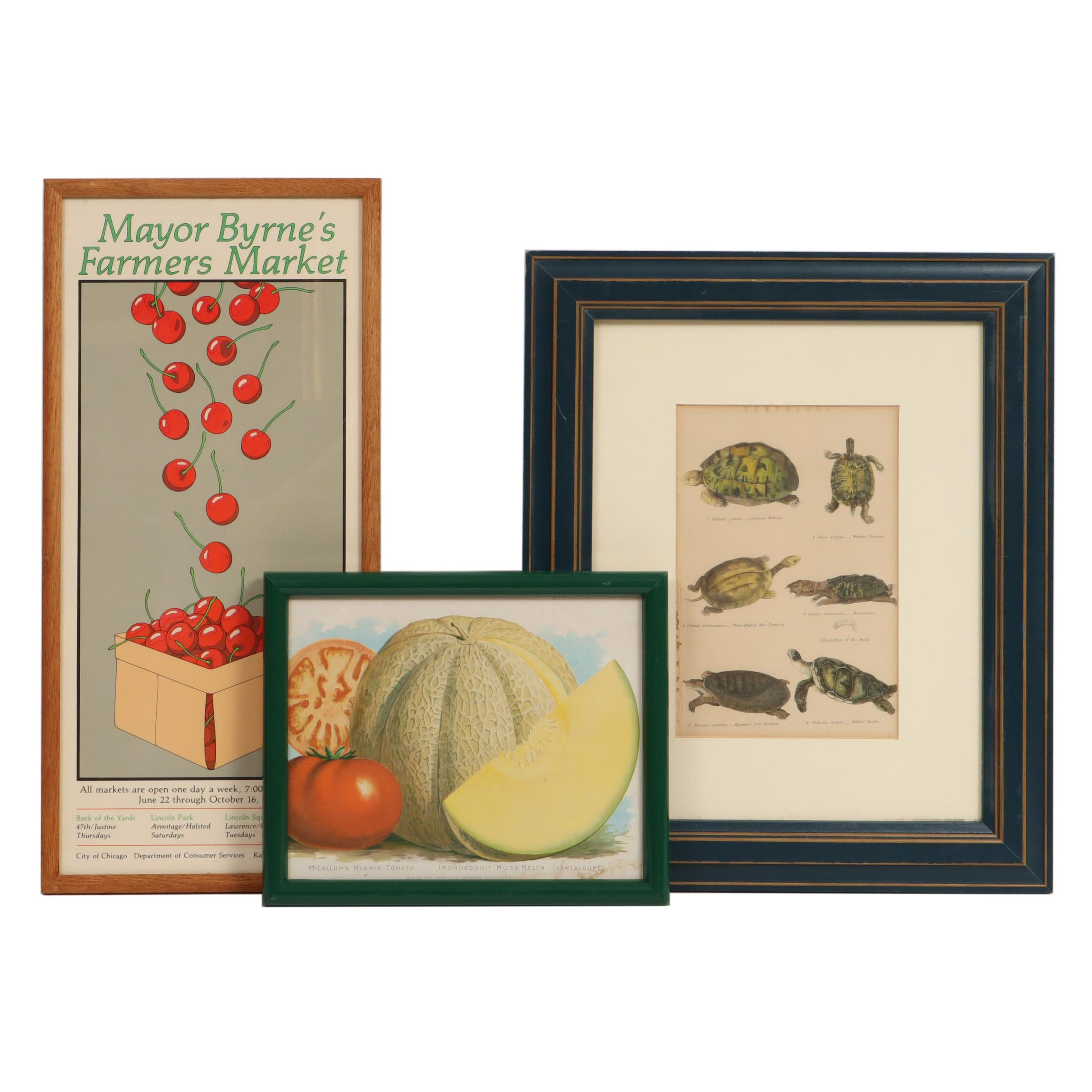 Nature and Fruit Color Engraving and Color Lithographs