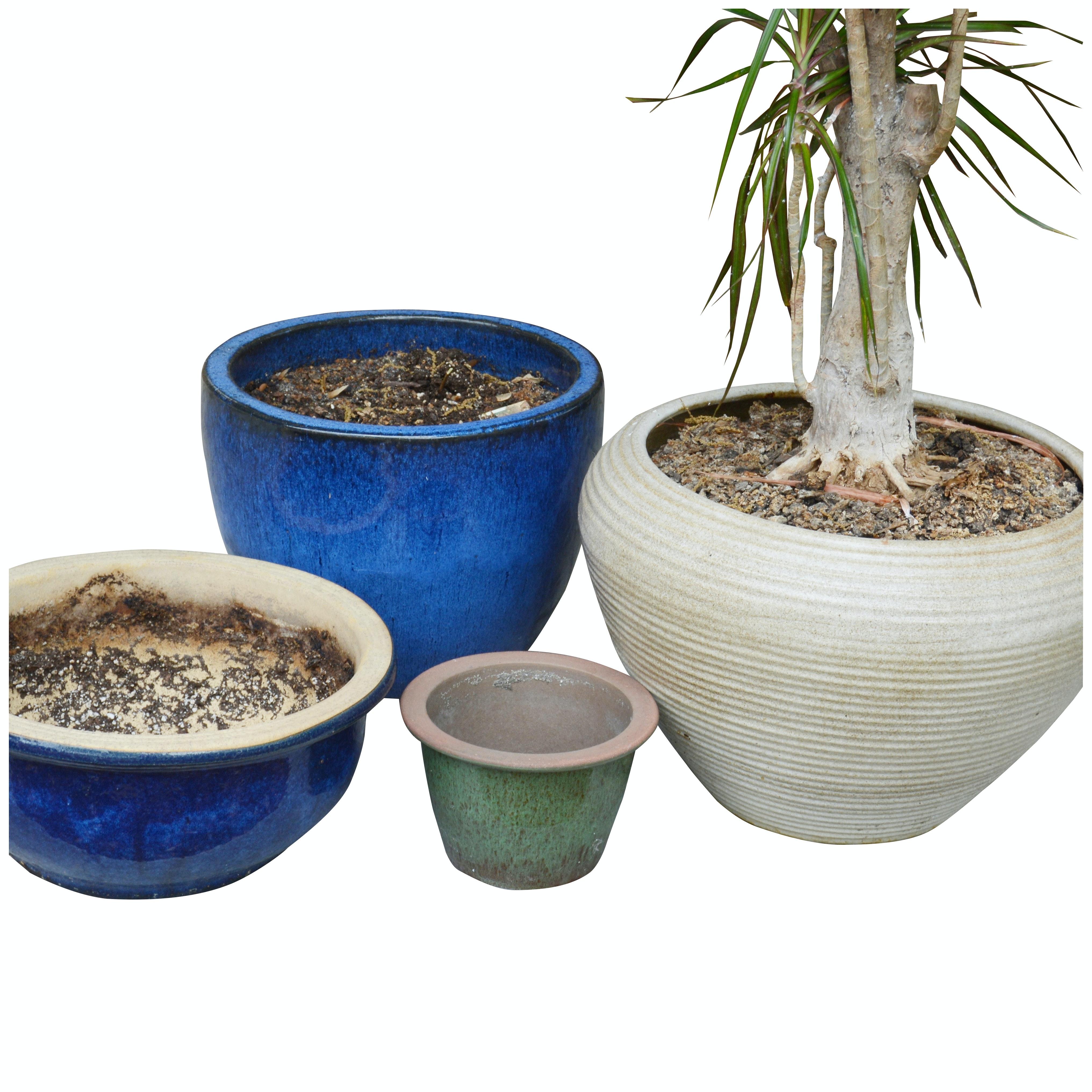 Live Palm Tree and Ceramic Planters
