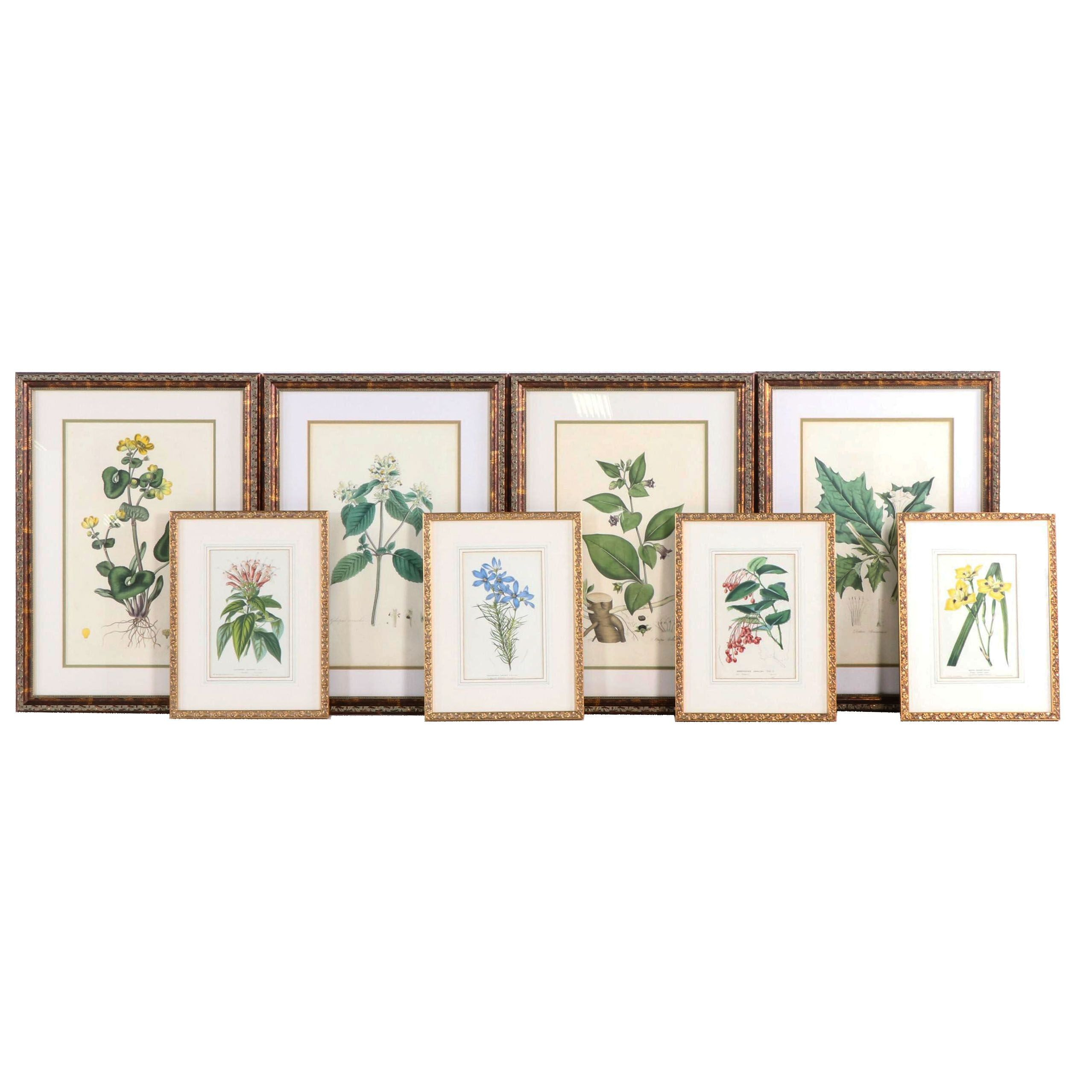 Botanical Hand-Colored Engravings and Color Lithographs