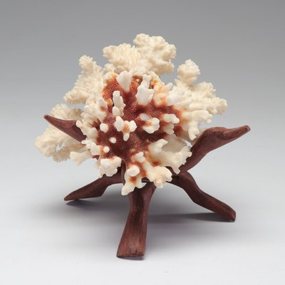 Coral Specimen on Wooden Stand