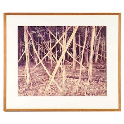 "David Graham Photograph ""Deep into the Woods"""