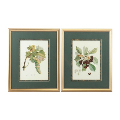 Offset Lithographs of Botanical Studies