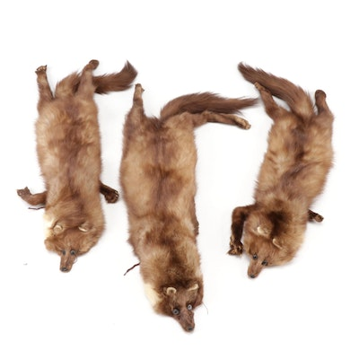 Full Pelt Marten Fur Stoles, Mid-20th Century