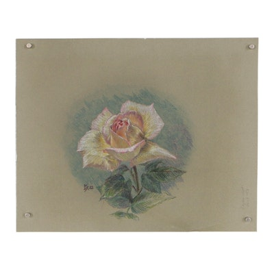 Mid 20th Century Colored Pencil Drawing of a Rose