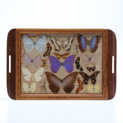 Wood and Glass Tray with Marquetry Border and Butterfly Specimens, Vintage