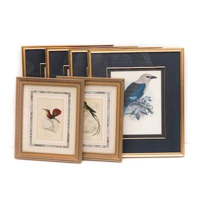 Offset Lithograph Prints After Vintage Botanical Works