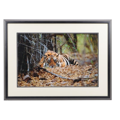 "Thomas D. Mangelsen Digital Photographic Print ""Bad Boy of the Forest"""