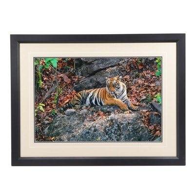"Thomas D. Mangelsen Digital Photographic Print ""Indian Princess- Bengal Tiger"""