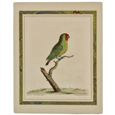"""Eleazar Albin 1736 Hand-Colored Engraving """"Paroquet from the East Indies"""""""