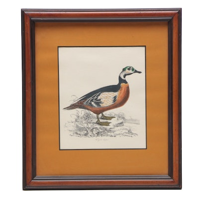 Hand-colored Lithograph after William Jardine Illustration of Wood Duck