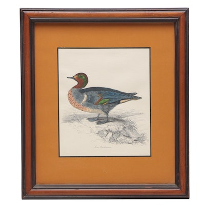 Hand-colored Lithograph after William Jardine Illustration of Green Winged Teal