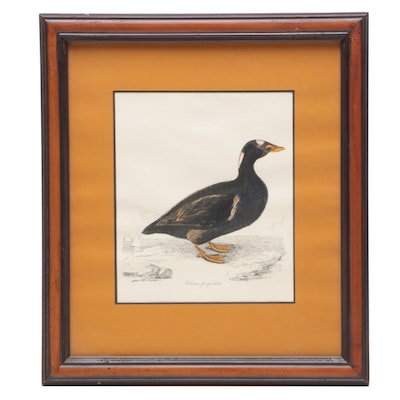 Hand-colored Lithograph after William Jardine Illustration of Mallard Duck