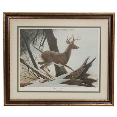 "John A. Ruthven Offset Print ""White-Tailed Deer"""