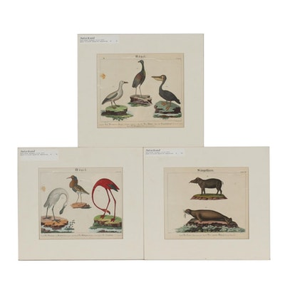 19th Century Hand-Colored Engravings from Wilmsen Natural History Manual