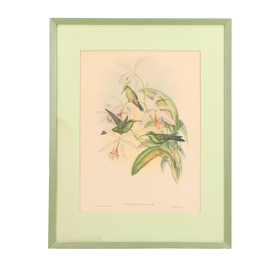 Offset Lithograph after John Gould Ornithological Illustration