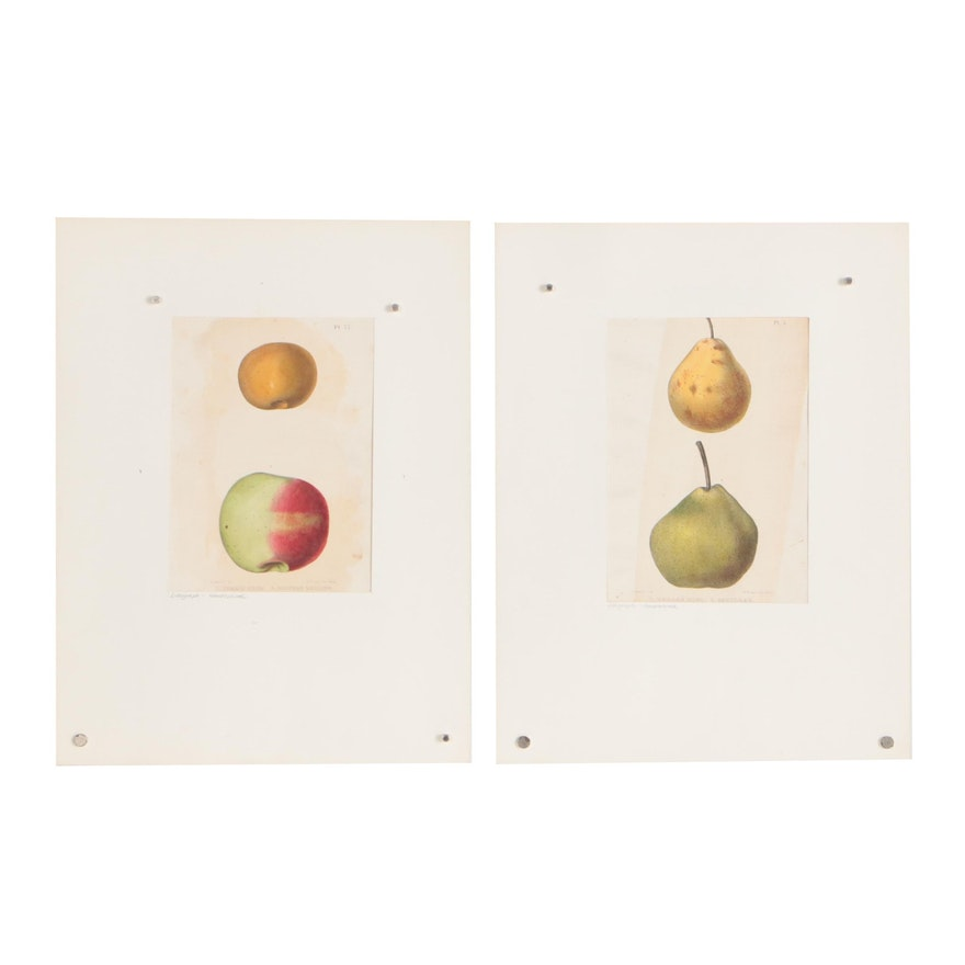 Mid 19th Century Hand-Colored Lithographs after E. Emmons Jr.