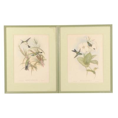 Offset Lithographs after John Gould Ornithological Illustrations