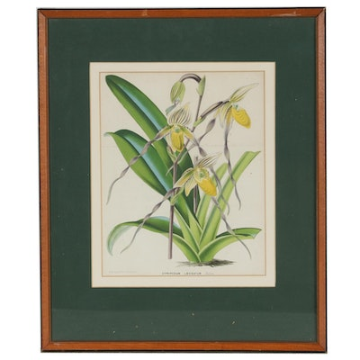 Horto Van Houtteano Late 19th Century Hand-Colored Botanical Lithograph