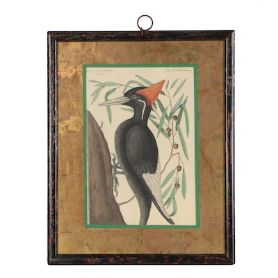 """Mark Catesby Etching """"Largest White Bill'd Woodpecker"""""""