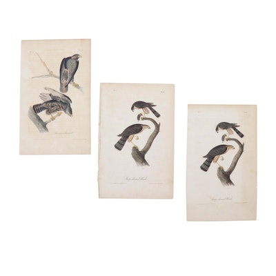 Hand-Colored Lithographs after John James Audubon, Mid-19th Century