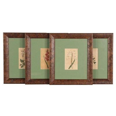 """Hand-Colored Botanical Etchings from """"Curtis' Botanical Magazine"""""""