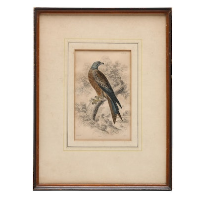 """Hand-Colored Etching After William Home Lizars """"Kite"""""""