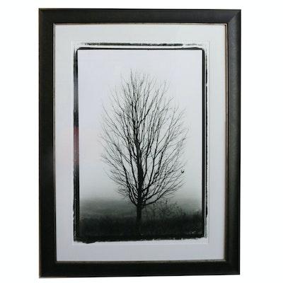 Framed Black & White Offset Lithograph of Tree