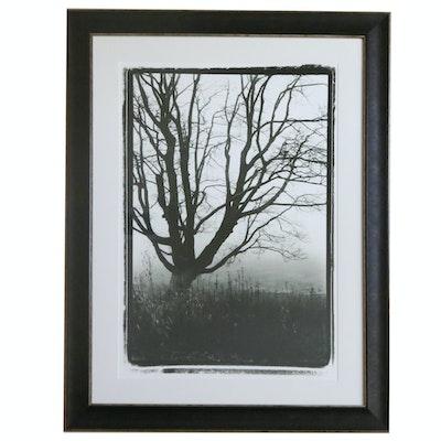Framed Offset Lithograph Tree Print