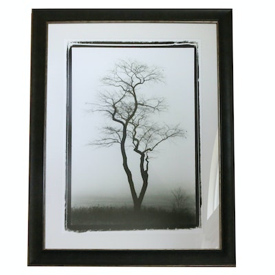 Black and White Offset Lithograph of Tree with Black Frame