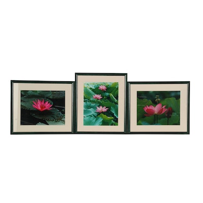 Water Lily Color Photographs