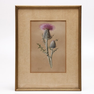 1881 Thistle Study Gouache Painting
