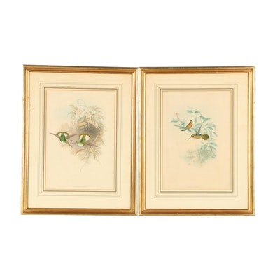 Ornithological Hand-Colored Lithographs After John Gould