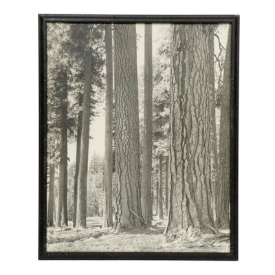 Black and White Forest Photograph