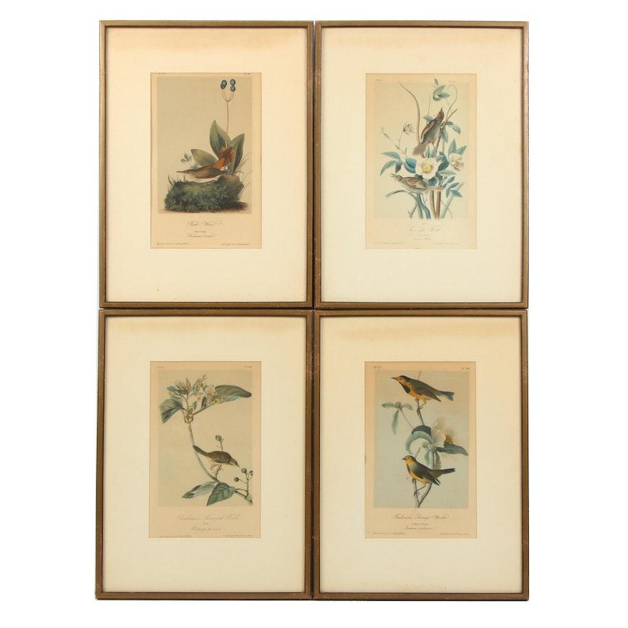 J. T. Bowen Lithographs after John J. Audubon Ornithological Illustrations