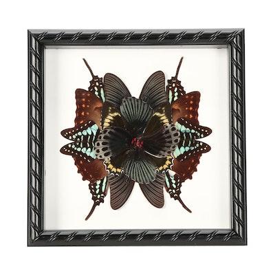 Butterfly Specimen Collage