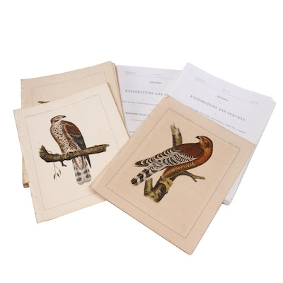 Hand-colored Ornithological Lithographs after John Mix Stanley