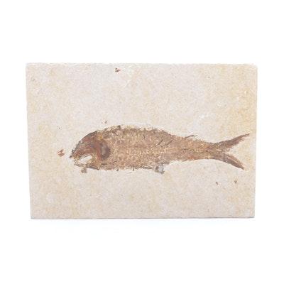Fossilized Fish Specimen in Stone