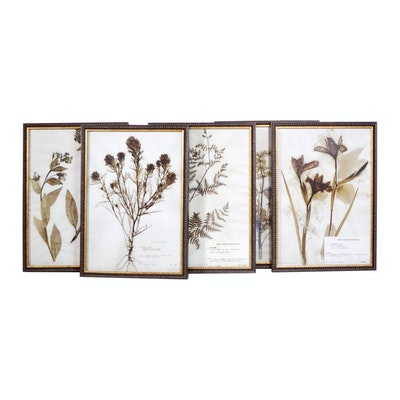 Offset Lithographs After the Emery Whilton Herbarium