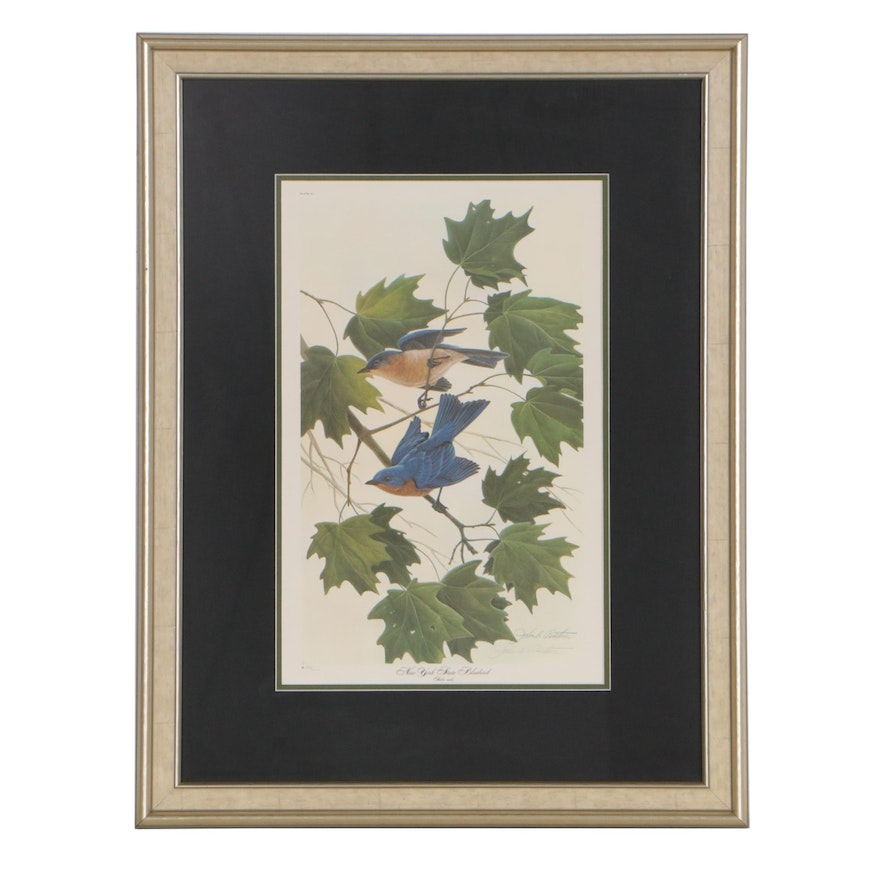 "John A. Ruthven Offset Lithograph ""New York State Bluebird"""