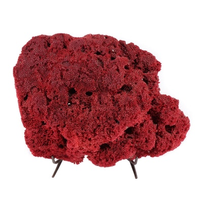 Pipe Organ Coral Specimen from the Philippines