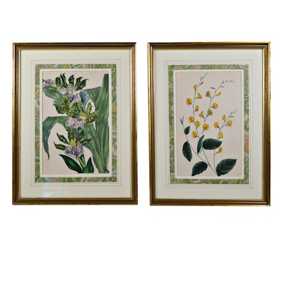 """Hand Colored Lithograph """"Paxton's Magazine of Botany,"""" Set of Two"""
