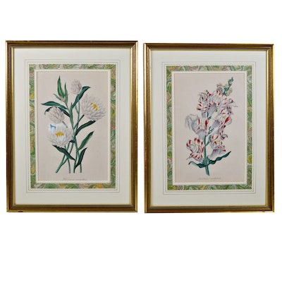 "Hand Colored Lithograph ""Paxton's Magazine of Botany,"" Set of Two"