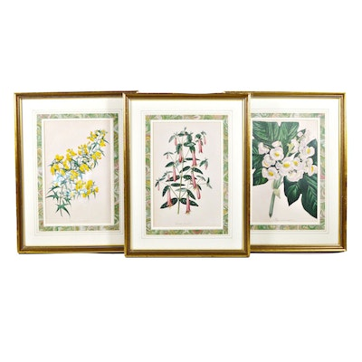 """Hand Colored Lithograph """"Paxton's Magazine of Botany,"""" Set of Three"""