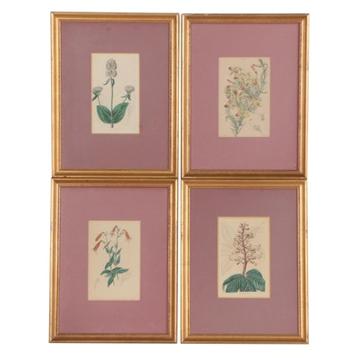 Botanical Etched and Lithographic Book Plates, Mid 19th Century