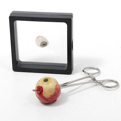 Glass Eye in Display Case with Decorative Replica Eye on Tissue Forceps