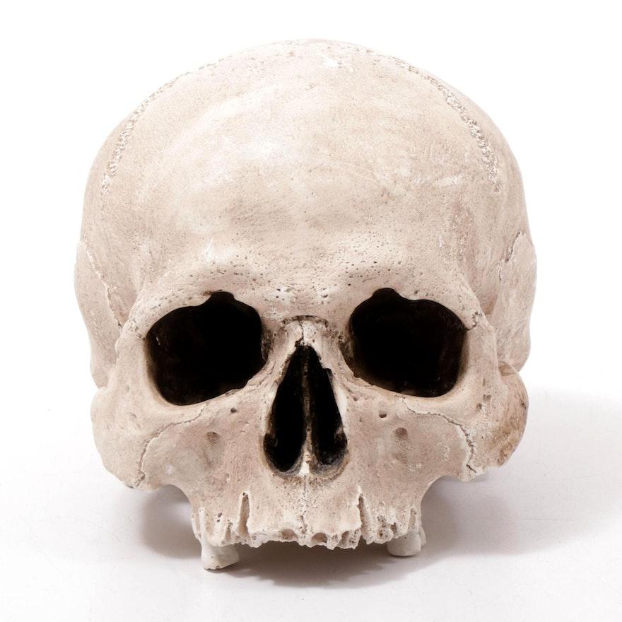 Porcelain Human Skull Replica