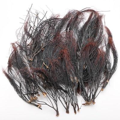 Black Coral Specimen Collection