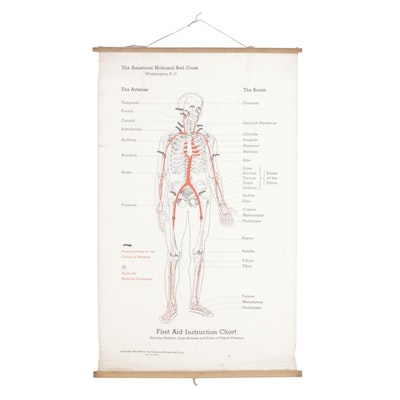Red Cross First Aid Instruction Anatomical Chart, 1930s