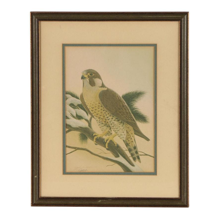 """John A. Ruthven Offset Lithograph """"Peregrine Falcon"""""""